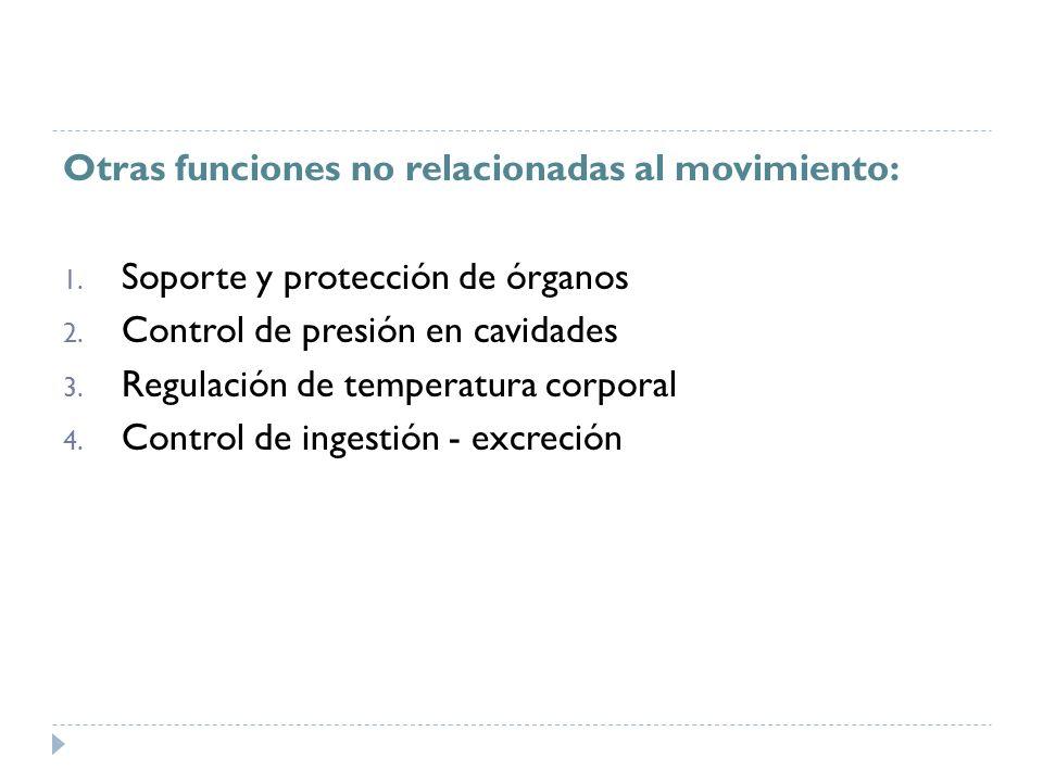 Otras funciones no relacionadas al movimiento: 1. Soporte y protección de órganos 2. Control de presión en cavidades 3. Regulación de temperatura corp