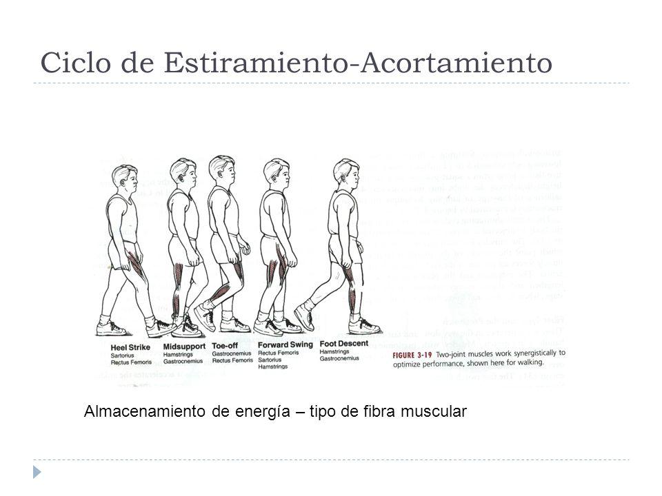 Ciclo de Estiramiento-Acortamiento Almacenamiento de energía – tipo de fibra muscular