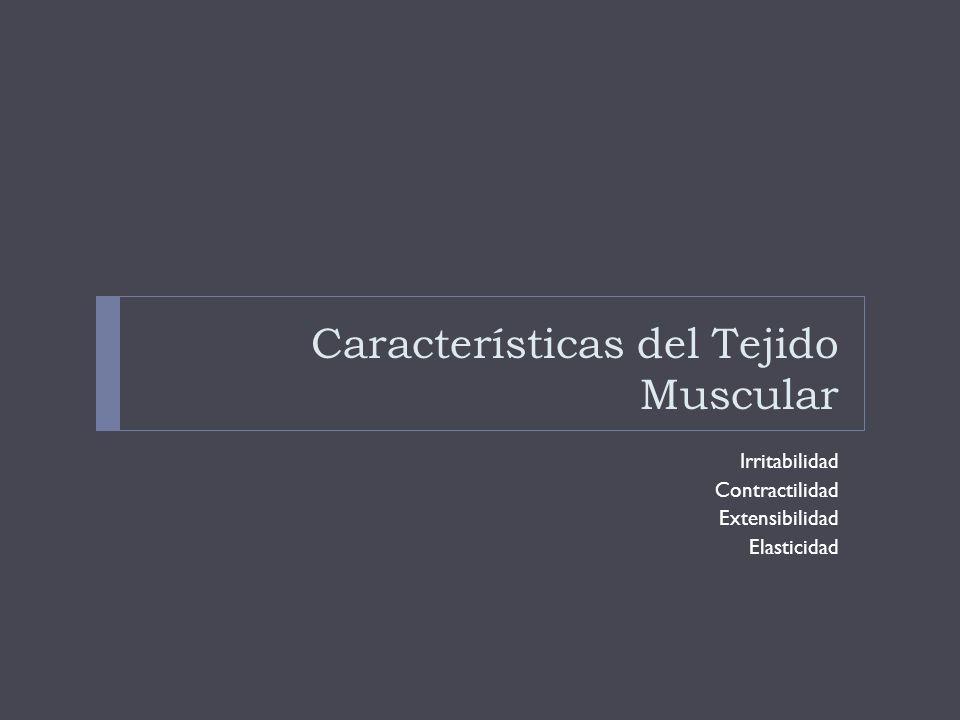 Características del Tejido Muscular Irritabilidad Contractilidad Extensibilidad Elasticidad