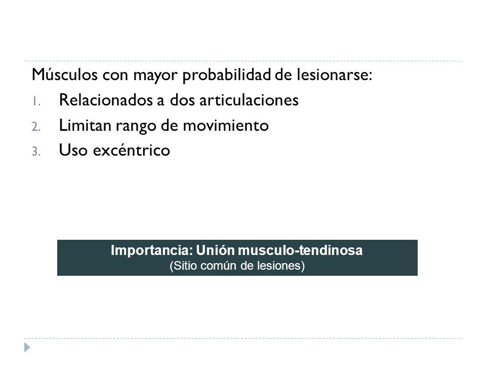 Músculos con mayor probabilidad de lesionarse: 1. Relacionados a dos articulaciones 2. Limitan rango de movimiento 3. Uso excéntrico Importancia: Unió