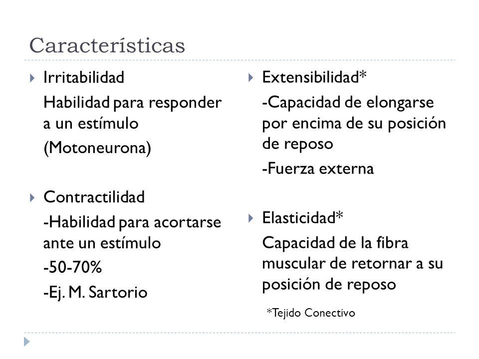 Características Irritabilidad Habilidad para responder a un estímulo (Motoneurona) Contractilidad -Habilidad para acortarse ante un estímulo -50-70% -