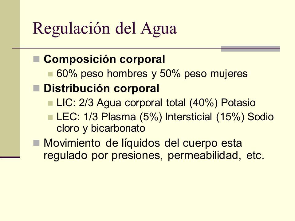 Regulación del Agua Osmolalidad normal: 275 – 290 Compartimento Intracelular: Evaluación difícil por medios indirectos Compartimento Intersticial: Manifestaciones de alteraciones por aumento ( edema) o disminución (contracción) Compartimento plasmático: Regulado por función cardíaca