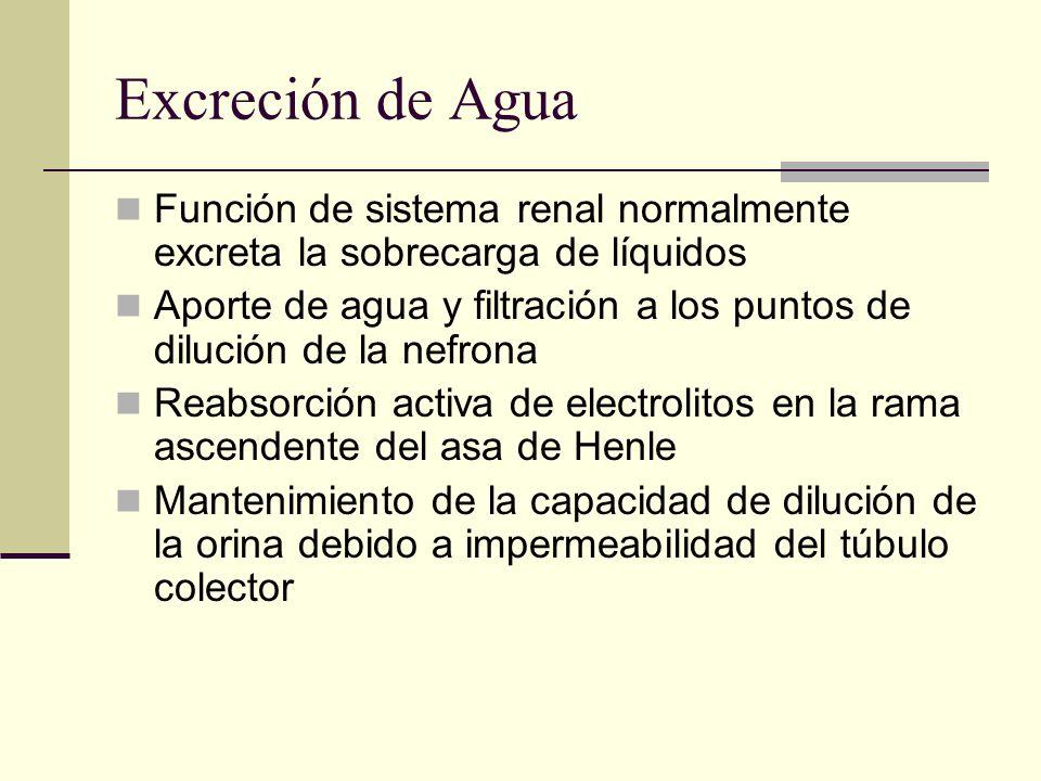 Excreción de Agua Función de sistema renal normalmente excreta la sobrecarga de líquidos Aporte de agua y filtración a los puntos de dilución de la ne