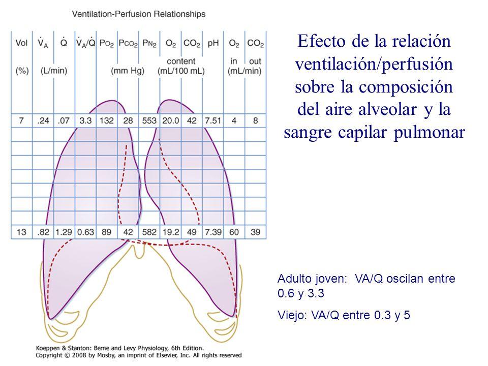 Efecto de la relación ventilación/perfusión sobre la composición del aire alveolar y la sangre capilar pulmonar Adulto joven: VA/Q oscilan entre 0.6 y