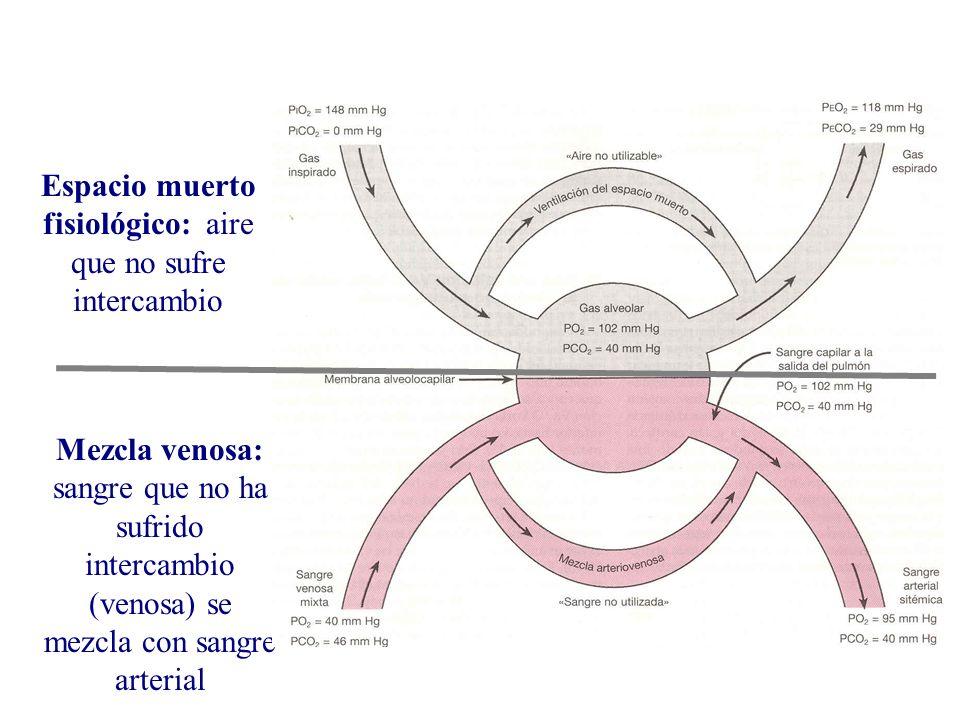 Mezcla venosa: sangre que no ha sufrido intercambio (venosa) se mezcla con sangre arterial Espacio muerto fisiológico: aire que no sufre intercambio