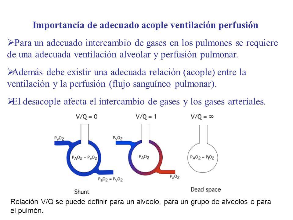 Importancia de adecuado acople ventilación perfusión Para un adecuado intercambio de gases en los pulmones se requiere de una adecuada ventilación alv