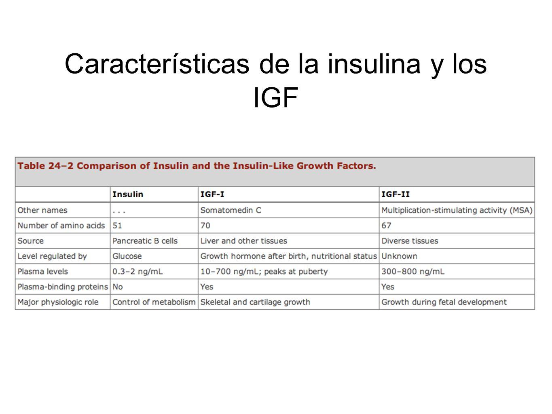 Características de la insulina y los IGF