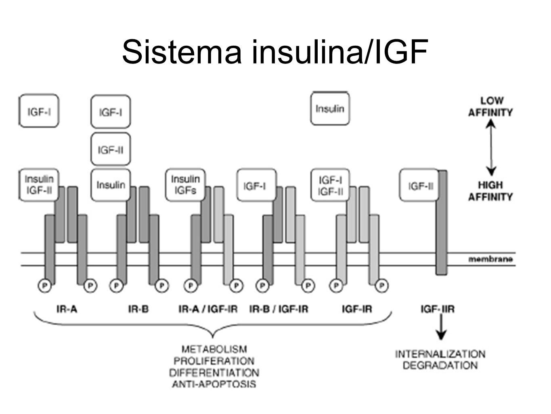 Sistema insulina/IGF