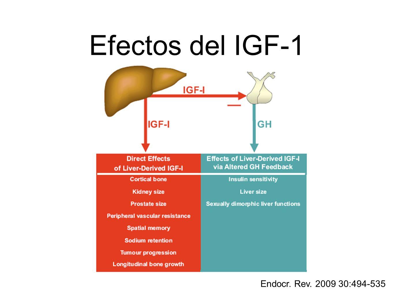 Endocr. Rev. 2009 30:494-535 Efectos del IGF-1
