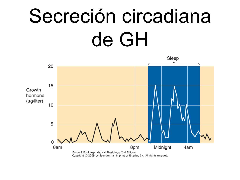 Secreción circadiana de GH