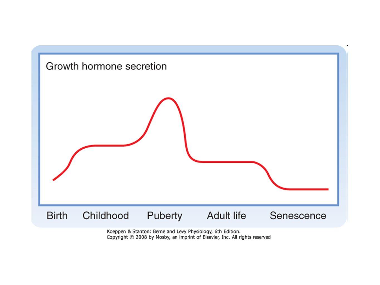 Secreción de GH en un adulto IntervalYoung Adult (μg/24h)FastingObesityMiddle Age 24-hr secretion540 ± 442171 ± 33377 ± 20196 ± 65 Secretory bursts12 ± 132 ± 23 ± 0.510 ± 1 GH burst45 ± 464 ± 924 ± 510 ± 6 Williams Textbook of Endocrinology, 11 th Edition