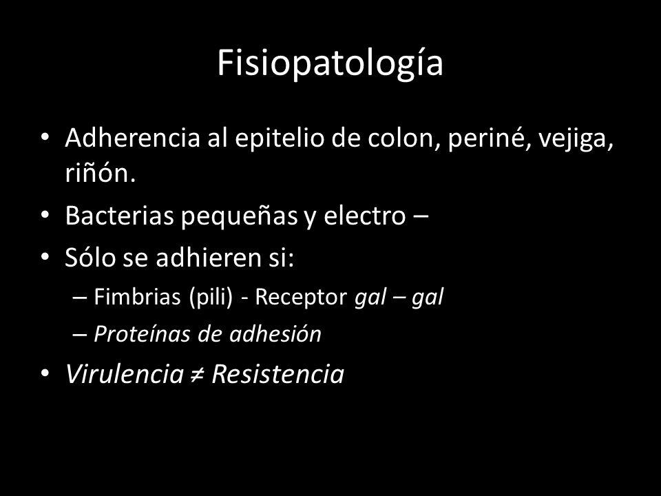 Fisiopatología Adherencia al epitelio de colon, periné, vejiga, riñón. Bacterias pequeñas y electro – Sólo se adhieren si: – Fimbrias (pili) - Recepto