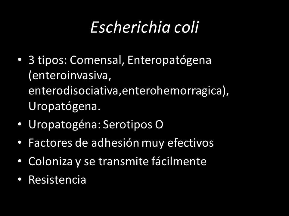 Escherichia coli 3 tipos: Comensal, Enteropatógena (enteroinvasiva, enterodisociativa,enterohemorragica), Uropatógena. Uropatogéna: Serotipos O Factor