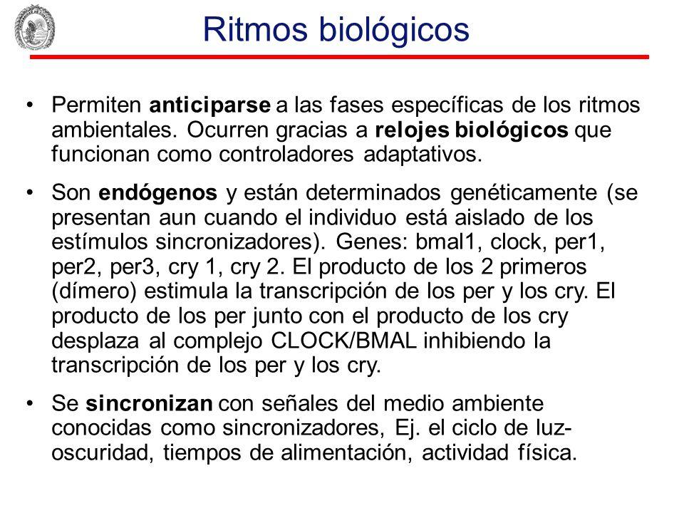 Ritmos biológicos Permiten anticiparse a las fases específicas de los ritmos ambientales. Ocurren gracias a relojes biológicos que funcionan como cont