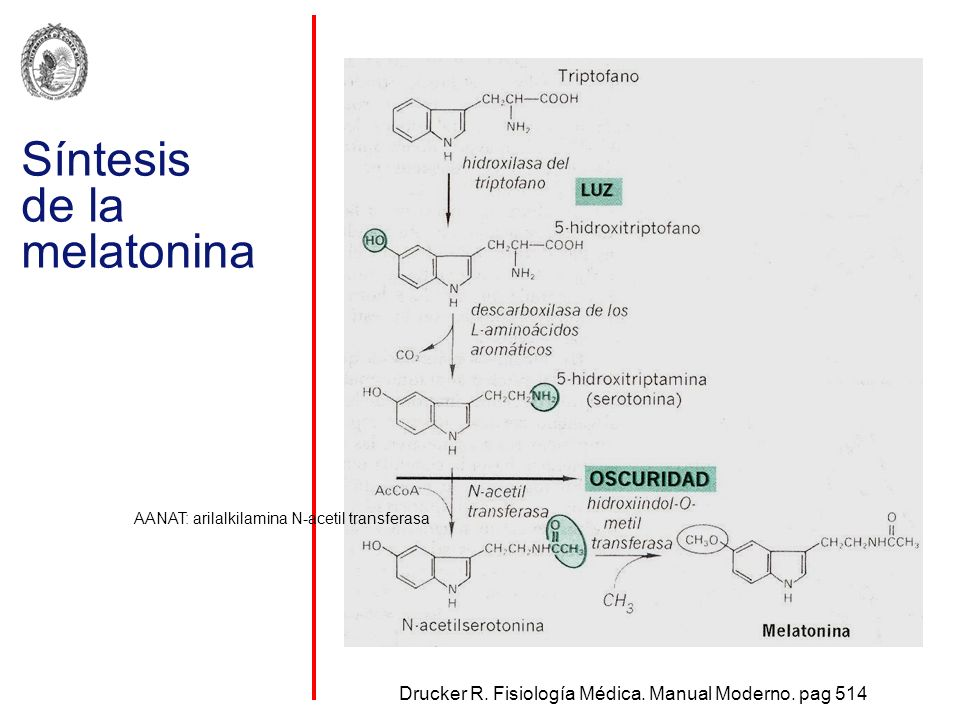 Síntesis de la melatonina Drucker R. Fisiología Médica. Manual Moderno. pag 514 AANAT: arilalkilamina N-acetil transferasa