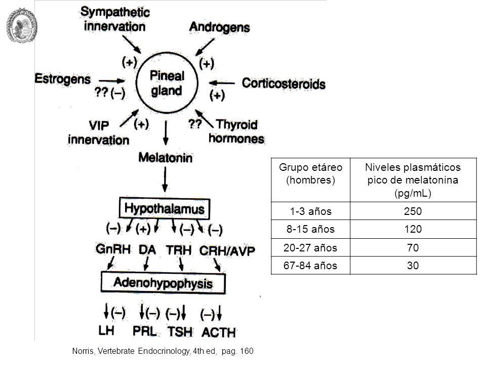 Norris, Vertebrate Endocrinology, 4th ed, pag. 160 Grupo etáreo (hombres) Niveles plasmáticos pico de melatonina (pg/mL) 1-3 años250 8-15 años120 20-2