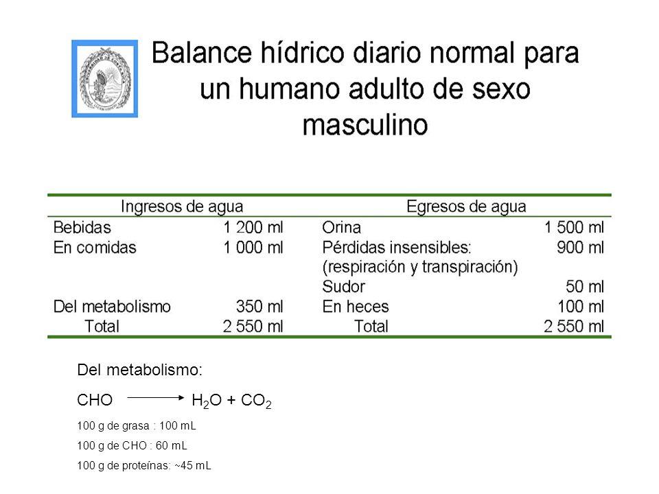 Del metabolismo: CHO H 2 O + CO 2 100 g de grasa : 100 mL 100 g de CHO : 60 mL 100 g de proteínas: 45 mL