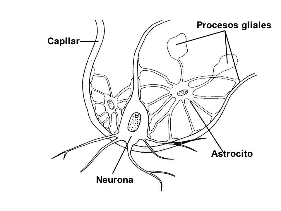 Absceso cerebral Si un esfacelo del cráneo ha ocurrido..........deberás incidir donde está hinchado, y limpiar y raspar el hueso hasta el diploe.