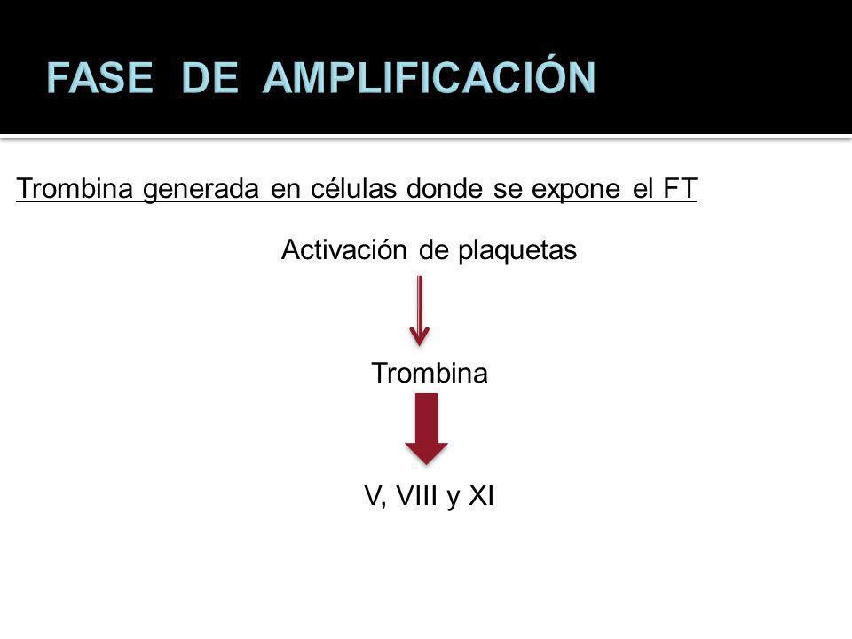 Trombina generada en células donde se expone el FT Activación de plaquetas Trombina V, VIII y XI