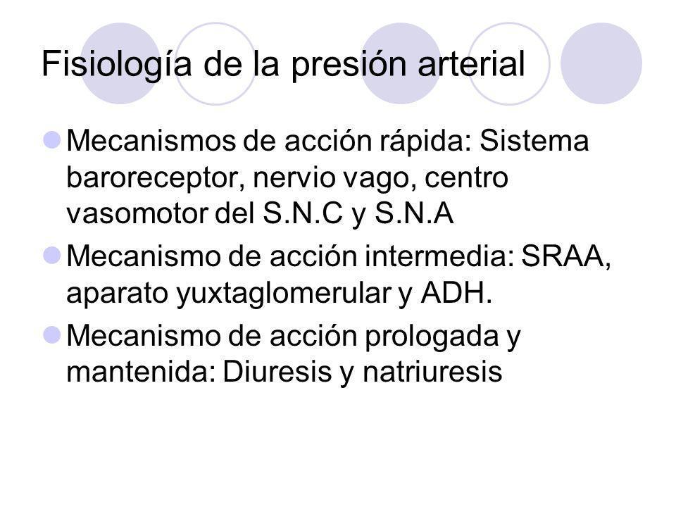 Fisiología de la presión arterial Mecanismos de acción rápida: Sistema baroreceptor, nervio vago, centro vasomotor del S.N.C y S.N.A Mecanismo de acci