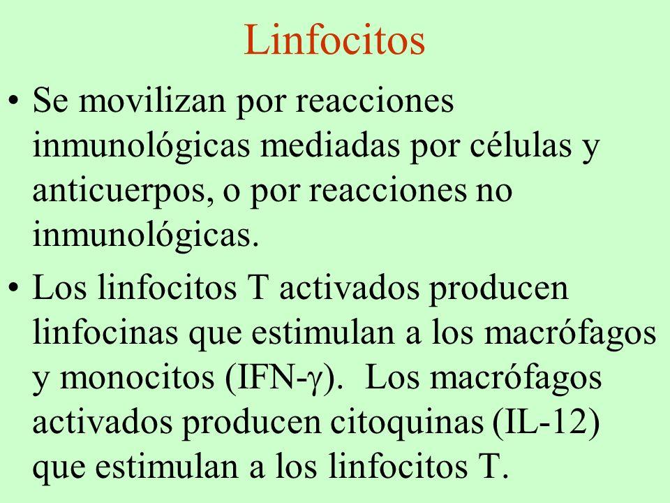 Linfocitos Se movilizan por reacciones inmunológicas mediadas por células y anticuerpos, o por reacciones no inmunológicas. Los linfocitos T activados