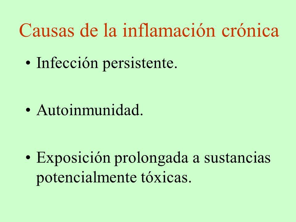 Causas de la inflamación crónica Infección persistente. Autoinmunidad. Exposición prolongada a sustancias potencialmente tóxicas.