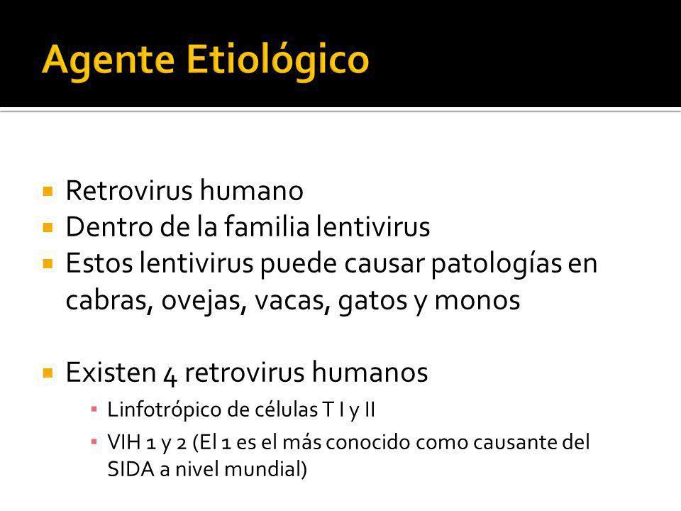 Retrovirus humano Dentro de la familia lentivirus Estos lentivirus puede causar patologías en cabras, ovejas, vacas, gatos y monos Existen 4 retroviru
