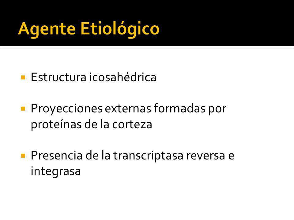 Estructura icosahédrica Proyecciones externas formadas por proteínas de la corteza Presencia de la transcriptasa reversa e integrasa