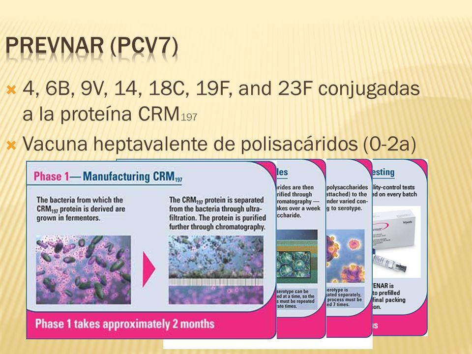 Prevnar (0.5 ml) se compone de: 16 μg de los sacáridos: 2 μg de las sepas (serotipos) 4, 9V, 14, 18C, 19F y 23F y 4 μg de la sepa (serotipo) 6B 20 μg de CRM 197 0.125 mg de aluminio por 0.5 ml de dosis como fosfato de aluminio como adyuvante.