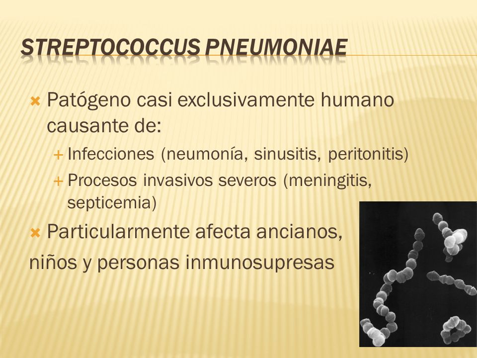 Patógeno casi exclusivamente humano causante de: Infecciones (neumonía, sinusitis, peritonitis) Procesos invasivos severos (meningitis, septicemia) Pa