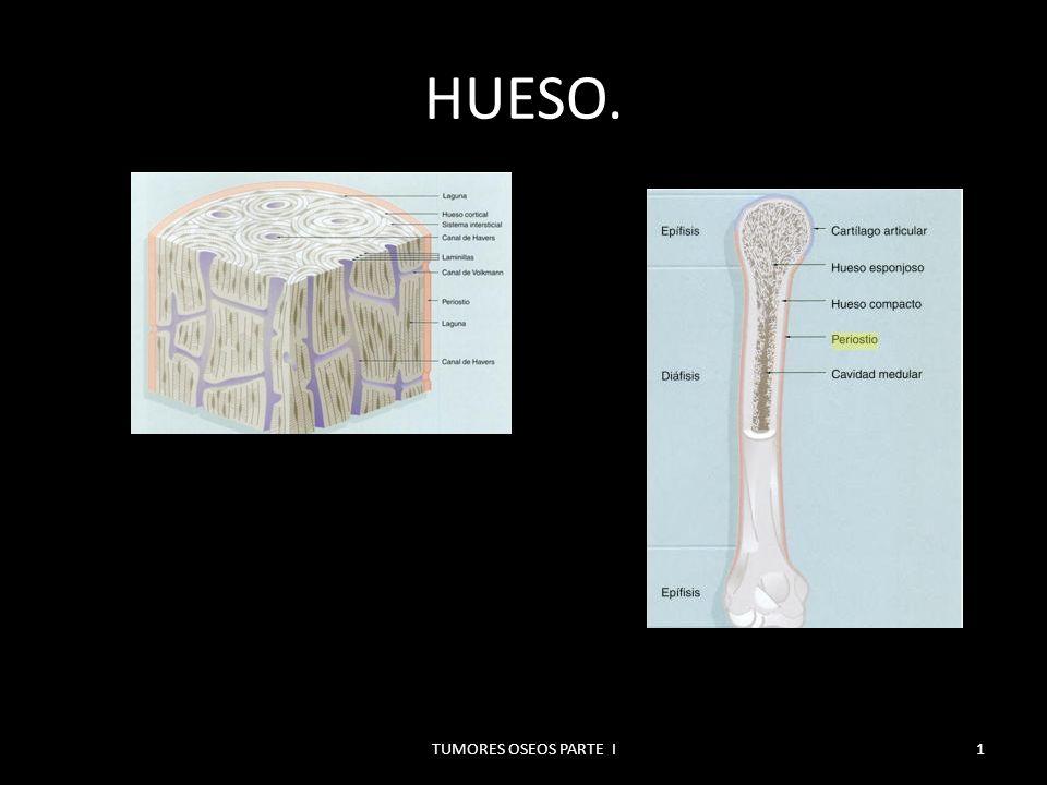 MICROGRAFIAS. HUESO COMPACTO NO TEÑIDO. 2TUMORES OSEOS PARTE I