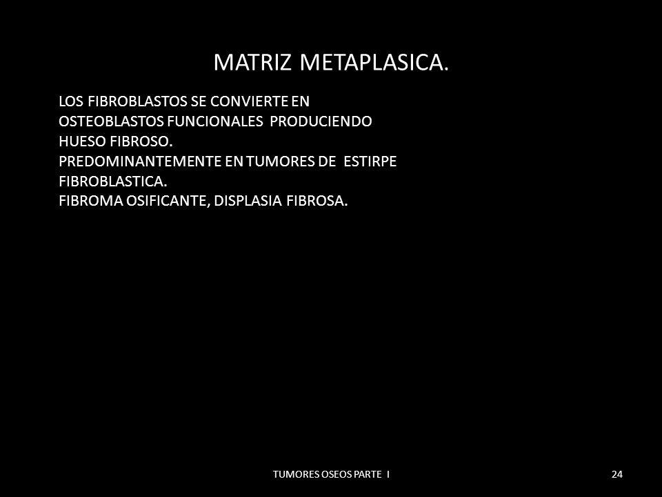MATRIZ ENCONDRAL.TUMORES OSEOS PARTE I25 MADURACION CARTILAGINOSA COMPLETA.
