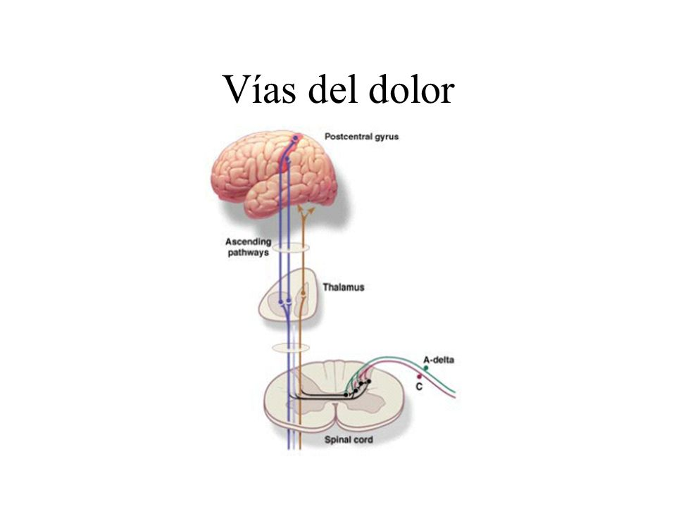 Consecuencias del no alivio del dolor Dolor Respuesta general al estrés Liberación de catecolaminas Midriasis Ansiedad Diaforesis Mv O 2 SRRA Citoquinas