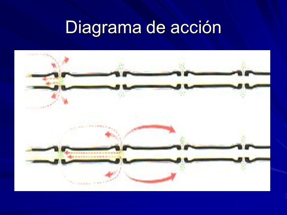 Diagrama de acción