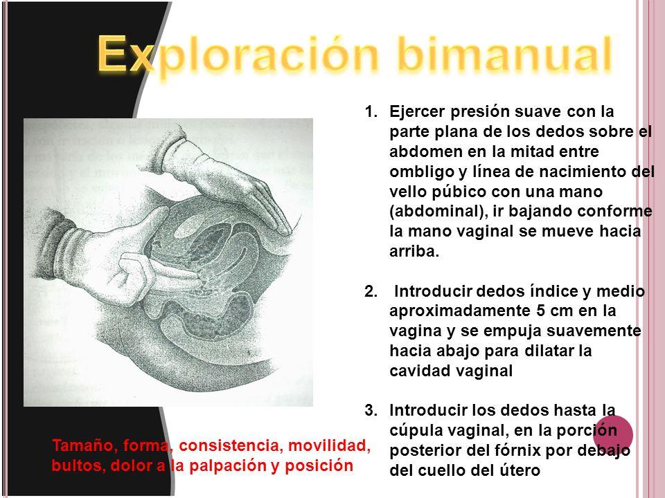 1.Ejercer presión suave con la parte plana de los dedos sobre el abdomen en la mitad entre ombligo y línea de nacimiento del vello púbico con una mano (abdominal), ir bajando conforme la mano vaginal se mueve hacia arriba.
