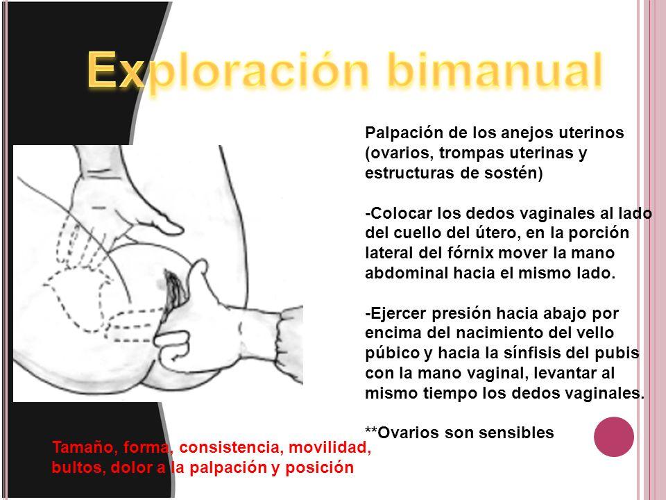 Palpación de los anejos uterinos (ovarios, trompas uterinas y estructuras de sostén) -Colocar los dedos vaginales al lado del cuello del útero, en la porción lateral del fórnix mover la mano abdominal hacia el mismo lado.