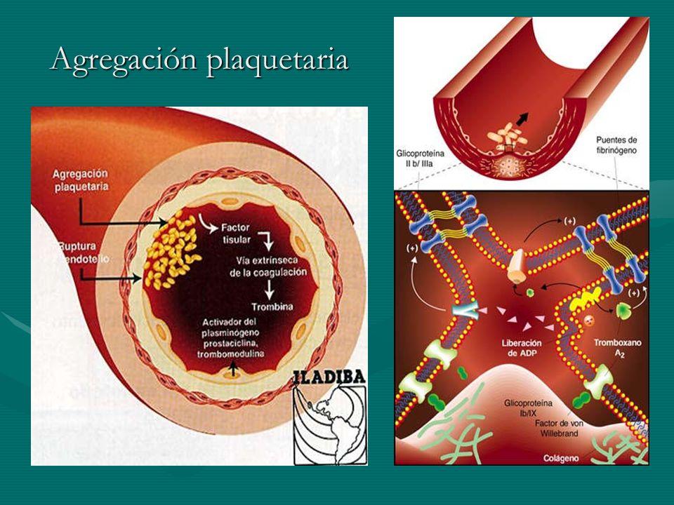 Agregación plaquetaria