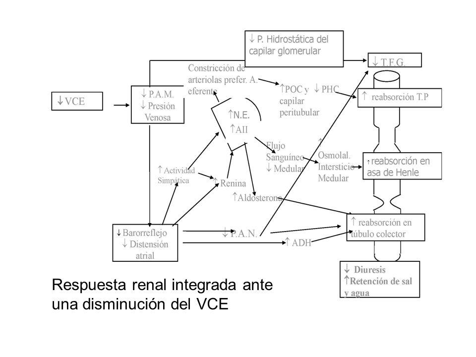 Respuesta renal integrada ante una disminución del VCE