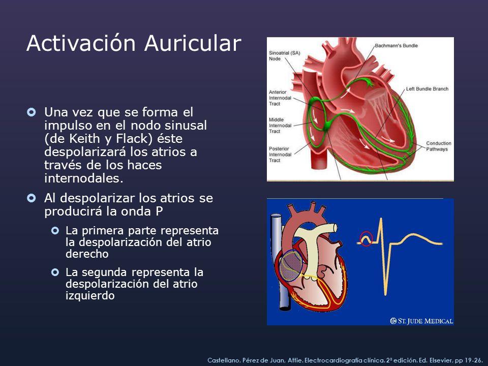 Activación Auricular Una vez que se forma el impulso en el nodo sinusal (de Keith y Flack) éste despolarizará los atrios a través de los haces interno