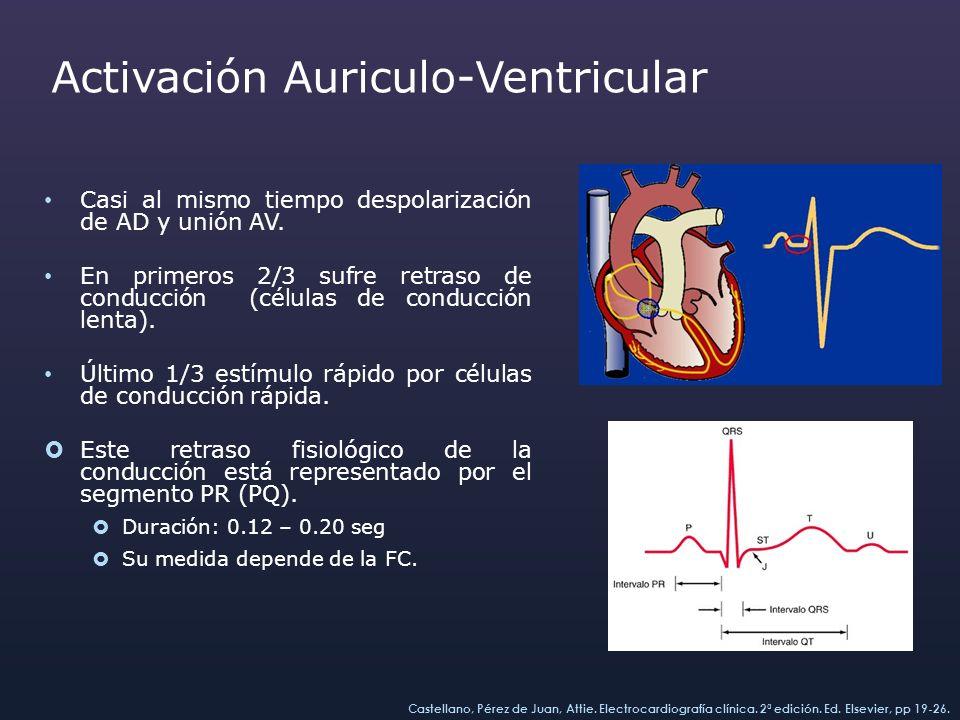 Activación Ventricular Cuando el estímulo abandona el nodo atrioventricular, toma el haz de His y cada una de sus ramas, derecha e izquierda, para luego llegar a las fibras más terminales del sistema de Purkinje, produciéndose entonces la despolarización ventricular.