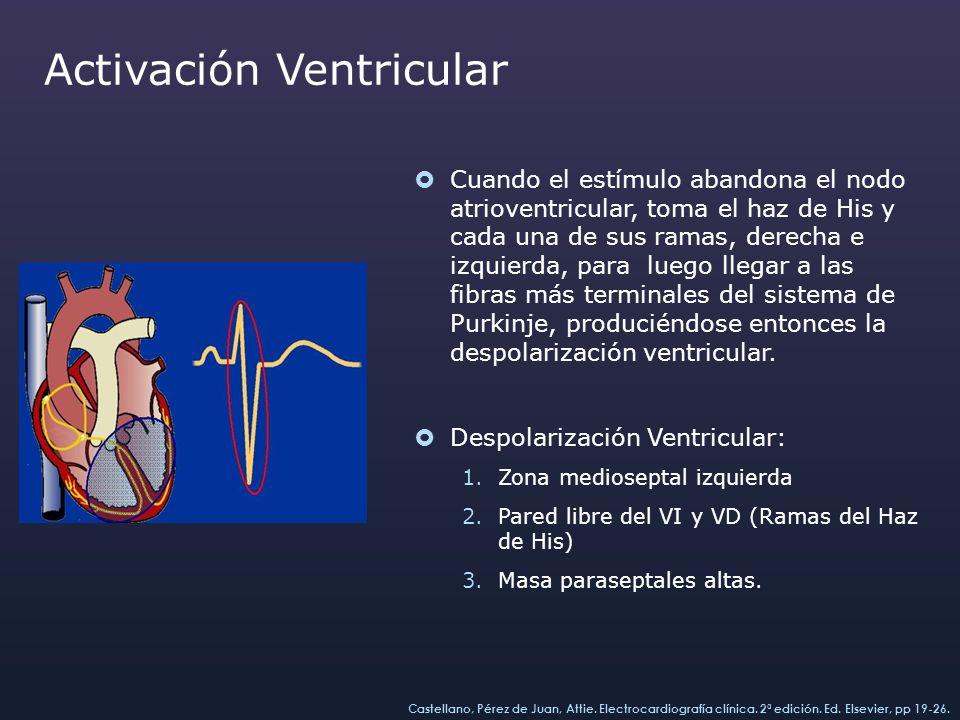 Vector 1 (septal): izquierda a derecha, arriba abajo y atrás adelante.