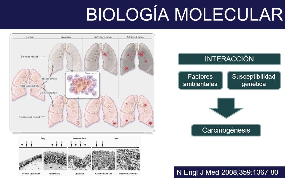 BIOLOGÍA MOLECULAR N Engl J Med 2008;359:1367-80 INTERACCIÓN Factores ambientales Susceptibilidad genética Carcinogénesis