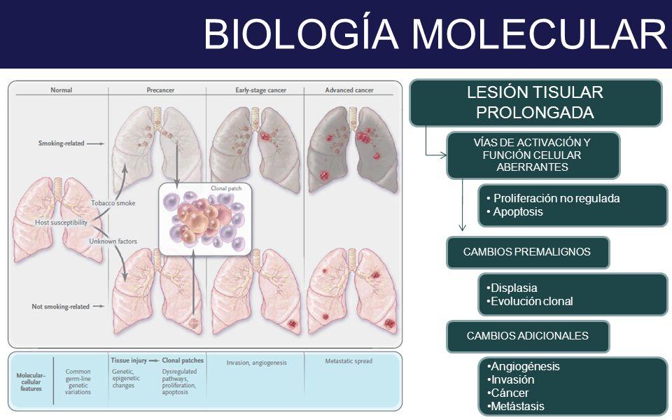 BIOLOGÍA MOLECULAR LESIÓN TISULAR PROLONGADA VÍAS DE ACTIVACIÓN Y FUNCIÓN CELULAR ABERRANTES CAMBIOS PREMALIGNOS Proliferación no regulada Apoptosis D