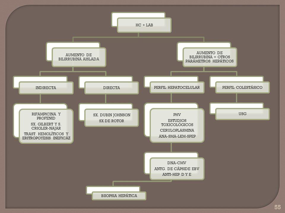 55 HC + LAB AUMENTO DE BILIRRUBINA AISLADA INDIRECTA RIFAMPICINA Y PROFENID SX. GILBERT Y S. CRIGLER-NAJAR TRAST. HEMOLÍTICOS Y ERITROPOYESIS INEFICAZ