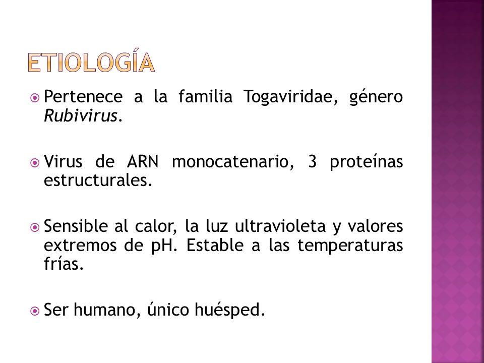 Pertenece a la familia Togaviridae, género Rubivirus. Virus de ARN monocatenario, 3 proteínas estructurales. Sensible al calor, la luz ultravioleta y