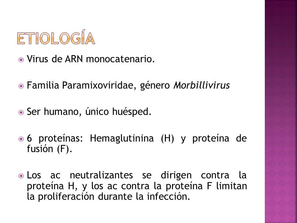 Virus de ARN monocatenario. Familia Paramixoviridae, género Morbillivirus Ser humano, único huésped. 6 proteínas: Hemaglutinina (H) y proteína de fusi