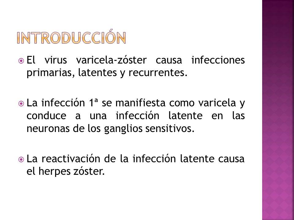 El virus varicela-zóster causa infecciones primarias, latentes y recurrentes. La infección 1ª se manifiesta como varicela y conduce a una infección la