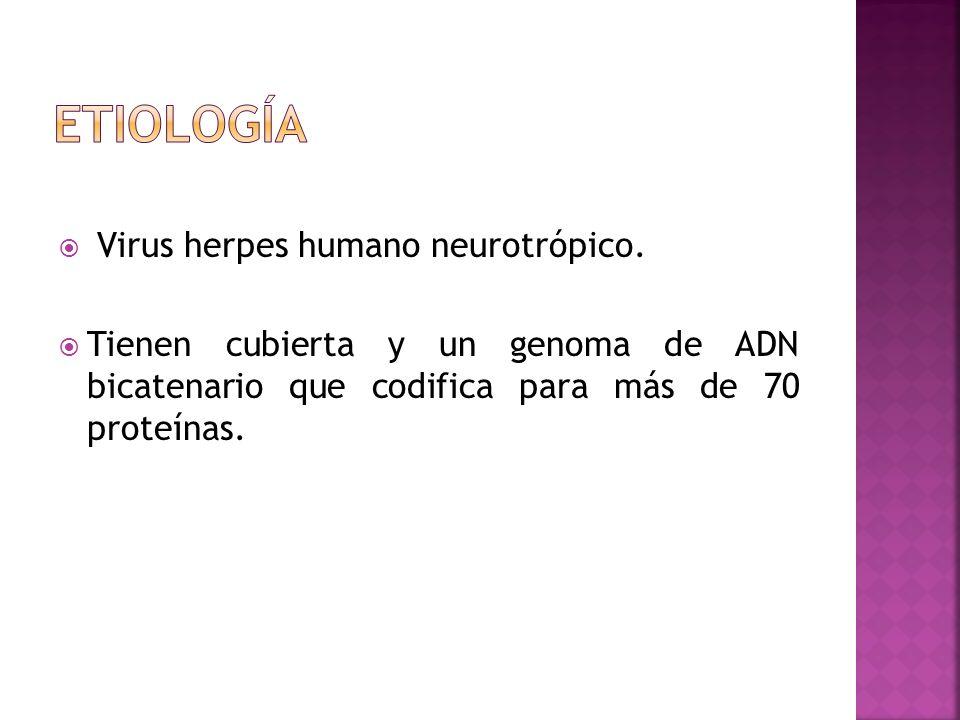 Virus herpes humano neurotrópico. Tienen cubierta y un genoma de ADN bicatenario que codifica para más de 70 proteínas.