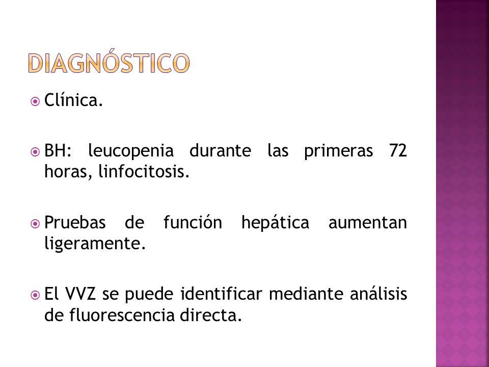 Clínica. BH: leucopenia durante las primeras 72 horas, linfocitosis. Pruebas de función hepática aumentan ligeramente. El VVZ se puede identificar med