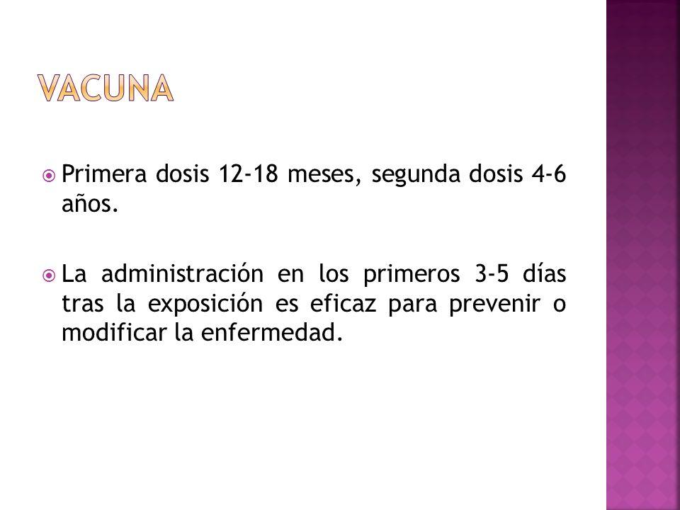 Primera dosis 12-18 meses, segunda dosis 4-6 años. La administración en los primeros 3-5 días tras la exposición es eficaz para prevenir o modificar l